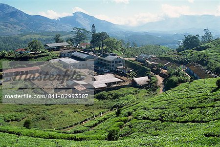 Tea estate near Munnar, Kerala state, India, Asia Stock Photo - Rights-Managed, Image code: 841-02993587