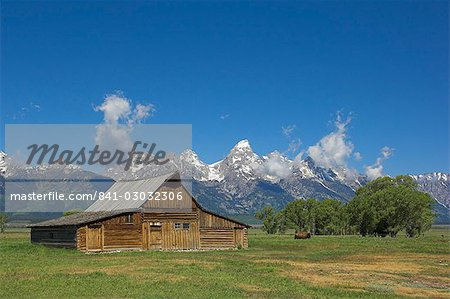 Mormon Row Barn and a bison off Antelope Flats Road, Jackson Hole, Grand Teton National Park, Wyoming, United States of America, North America Stock Photo - Rights-Managed, Image code: 841-03032306