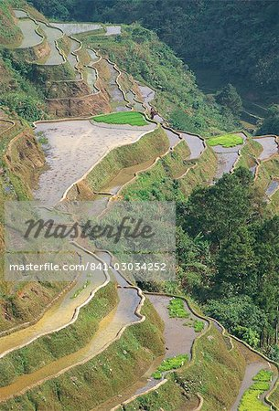 Banaue terraced rice fields,UNESCO World Heritage Site,northern area,island of Luzon,Philippines,Southeast Asia,Asia Stock Photo - Rights-Managed, Image code: 841-03034252