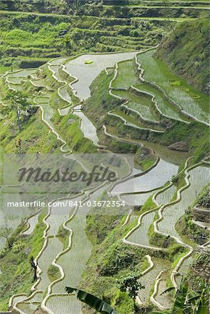 Mud-walled rice terraces of Ifugao culture, Banaue, UNESCO World Heritage Site, Cordillera, Luzon, Philippines, Southeast Asia, Asia Stock Photo - Rights-Managed, Image code: 841-03672354