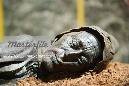 Preserved body of the Tollund Man, hung to death in 300 BC, Silkeborg Museum, Silkeborg, Jutland, Denmark, Scandinavia, Europe Stock Photo - Rights-Managed, Image code: 841-03673028