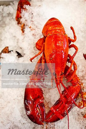 Lobster for sale in Alma, New Brunswick, Canada, North America Stock Photo - Rights-Managed, Image code: 841-03675040