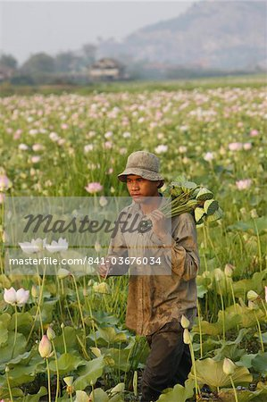 Lotus farmer, Siem Reap, Cambodia, Indochina, Southeast Asia, Asia Stock Photo - Rights-Managed, Image code: 841-03676034