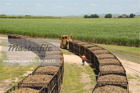Machine-cut sugar cane in rail trucks outside mill, Ayr, Queensland, Australia, Pacific Stock Photo - Rights-Managed, Image code: 841-05781225