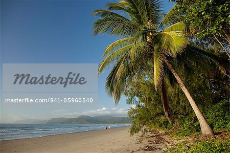 Four Mile Beach with coconut palm trees, Port Douglas, Queensland, Australia, Pacific Stock Photo - Rights-Managed, Image code: 841-05960540