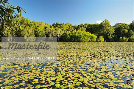 Keating's Lagoon, Cooktown, Queensland, Australia, Pacific Stock Photo - Rights-Managed, Image code: 841-05960833