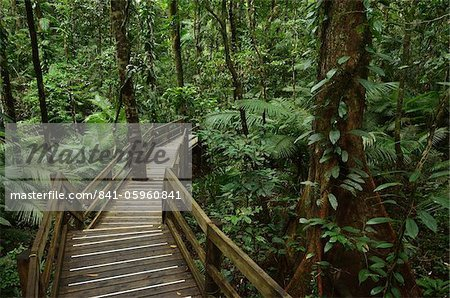 Boardwalk through rainforest, Daintree National Park, UNESCO World Heritage Site, Queensland, Australia, Pacific Stock Photo - Rights-Managed, Image code: 841-05960841