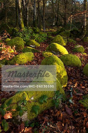 Mossy boulders, Dartmoor National Park, Devon, England, United Kingdom, Europe Stock Photo - Rights-Managed, Image code: 841-06030590