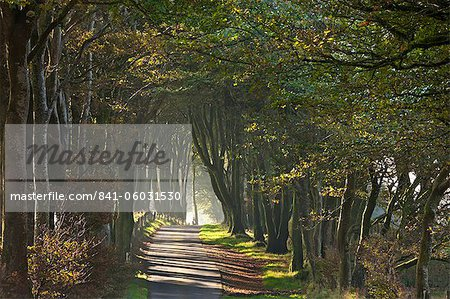 Autumnal tree lined lane, Dartmoor, Devon, England, United Kingdom, Europe Stock Photo - Rights-Managed, Image code: 841-06031530