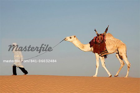 Camel driver in the Sahara desert, near Douz, Kebili, Tunisia, North Africa, Africa Stock Photo - Rights-Managed, Image code: 841-06032484