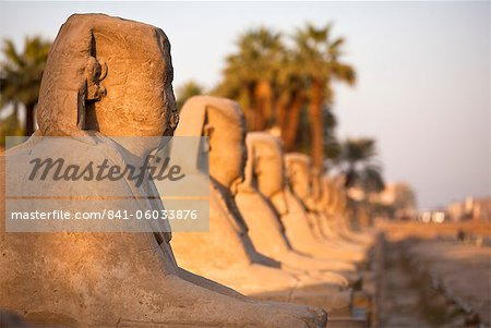 Luxor Temple, Luxor, Thebes, UNESCO World Heritage Site, Egypt, North Africa, Africa Stock Photo - Rights-Managed, Image code: 841-06033876