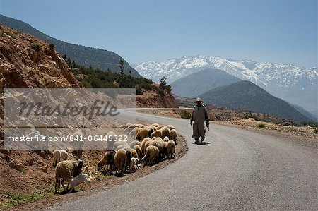 A local man herding sheep on a road with the snow capped Atlas Mountains in the background, Morocco, North Africa, Africa Stock Photo - Rights-Managed, Image code: 841-06445522