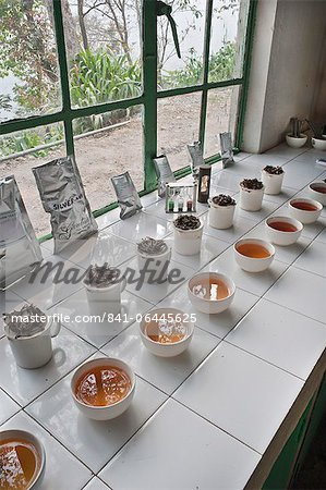 Glenburn Tea Factory, near Darjeeling, West Bengal, India, Asia Stock Photo - Rights-Managed, Image code: 841-06445625