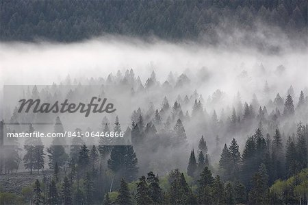 Fog mingling with evergreen trees, Yellowstone National Park, UNESCO World Heritage Site, Wyoming, United States of America, North America Stock Photo - Rights-Managed, Image code: 841-06446866