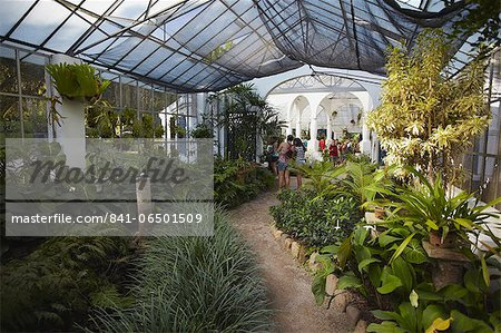 People inside orchid house at Botanical Gardens (Jardim Botanico), Rio de Janeiro, Brazil, South America Stock Photo - Rights-Managed, Image code: 841-06501509