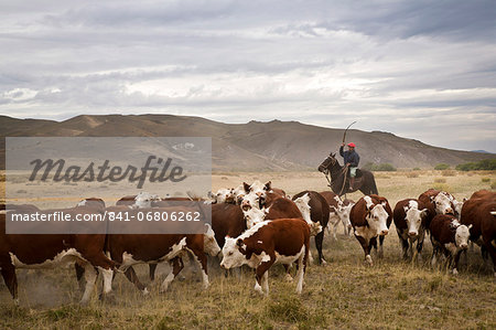 Gauchos with cattle at the Huechahue Estancia, Patagonia, Argentina, South America Stock Photo - Rights-Managed, Image code: 841-06806262