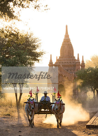 Bullock cart on a dusty track among the temples of Bagan with light from the setting sun shining through the dust, Bagan, Myanmar (Burma), Southeast Asia Stock Photo - Rights-Managed, Image code: 841-07081617