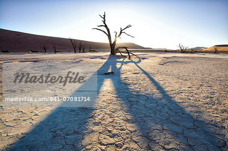 Dead camelthorn trees said to be centuries old in silhouette at sunset in the dried mud pan at Dead Vlei, Namib Desert, Namib Naukluft Park, Namibia, Africa Stock Photo - Rights-Managed, Image code: 841-07081714