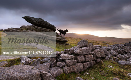 The Hound of the Baskervilles, roaming Belstone Tor on Dartmoor National Park, Devon, England, United Kingdom, Europe Stock Photo - Rights-Managed, Image code: 841-07082980