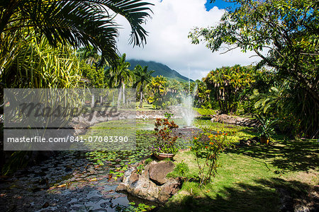 Botanical Gardens on Nevis Island, St. Kitts and Nevis, Leeward Islands, West Indies, Caribbean, Central America Stock Photo - Rights-Managed, Image code: 841-07083390