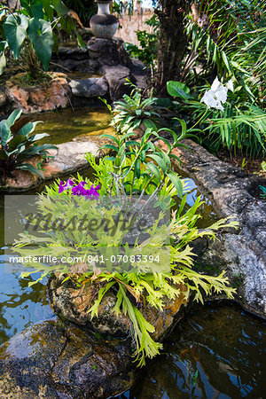 Botanical Gardens on Nevis Island, St. Kitts and Nevis, Leeward Islands, West Indies, Caribbean, Central America Stock Photo - Rights-Managed, Image code: 841-07083394