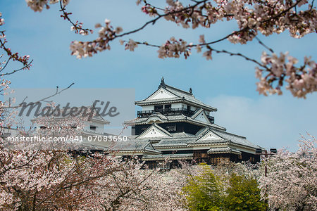 Cherry blossom in the Matsuyama Castle, Shikoku, Japan, Asia Stock Photo - Rights-Managed, Image code: 841-07083650