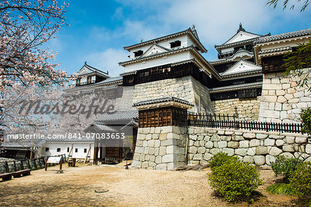 Cherry blossom in the Matsuyama Castle, Shikoku, Japan, Asia Stock Photo - Rights-Managed, Image code: 841-07083653
