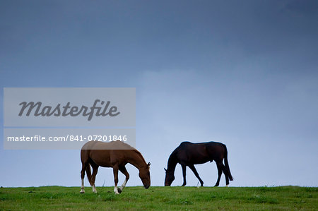 Horses grazing, Cirencester, Gloucestershire, United Kingdom Stock Photo - Rights-Managed, Image code: 841-07201846