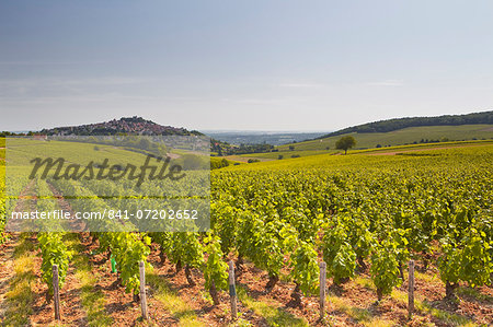 The vineyards of Sancerre in the Loire Valley, Cher, Centre, France, Europe Stock Photo - Rights-Managed, Image code: 841-07202652