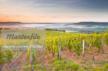 Vineyards near to Vezelay during a misty dawn, Burgundy, France, Europe Stock Photo - Rights-Managed, Image code: 841-07202653