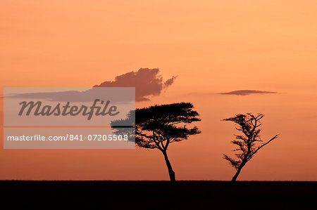 Two acacia trees at dawn, Serengeti National Park, UNESCO World Heritage Site, Tanzania, East Africa, Africa Stock Photo - Rights-Managed, Image code: 841-07205508