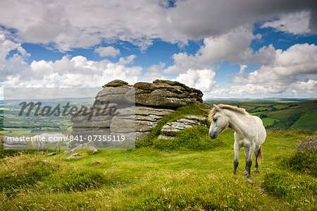 Ponies graze in the summer sunshine beside Chinkwell Tor in Dartmoor National Park, Devon, England, United Kingdom, Europe Stock Photo - Rights-Managed, Image code: 841-07355119