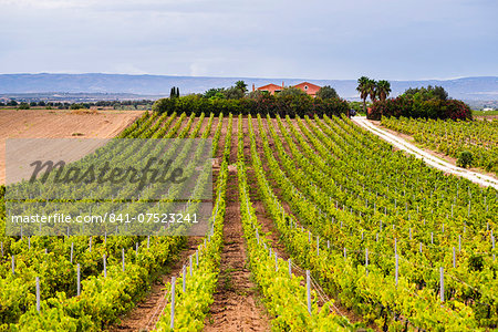 Vineyard at a winery near Noto, South East Sicily, Italy, Europe Stock Photo - Rights-Managed, Image code: 841-07523241