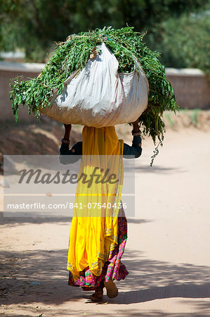 Indian woman villager working at farm smallholding carrying animal feed at Sawai Madhopur near Ranthambore in Rajasthan, India Stock Photo - Rights-Managed, Image code: 841-07540436