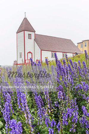 Monkshood (aconitum) flowers in front of the church in the small preserved fishing village of Battle Harbour, Labrador, Canada, North America Stock Photo - Rights-Managed, Image code: 841-07589832