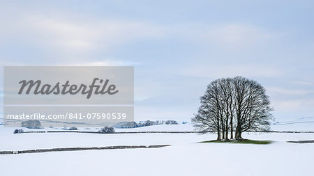 A small copse of trees in the winter snow near Malham, Yorkshire Dales, Yorkshire, England, United Kingdom, Europe Stock Photo - Rights-Managed, Image code: 841-07590539