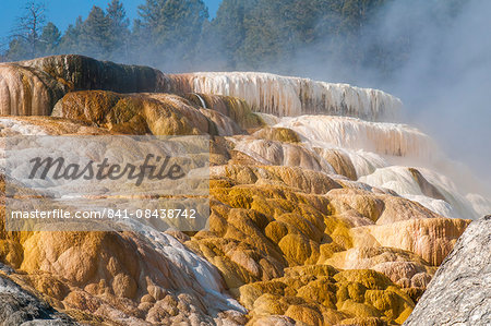 Mammoth Hot Springs terraces, Yellowstone National Park, UNESCO World Heritage Site, Wyoming, United States of America, North America Stock Photo - Rights-Managed, Image code: 841-08438742