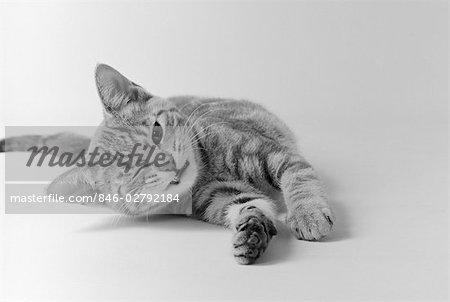 HEAD ON VIEW OF YOUNG STRIPED CAT STRETCHING OUT ON FLOOR ONE EYE CLOSED INDOOR Stock Photo - Rights-Managed, Image code: 846-02792184