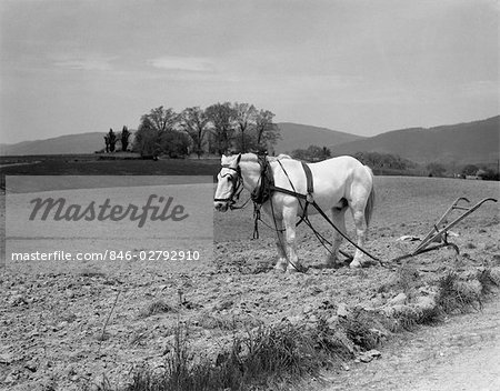 1930s WHITE HORSE IN FIELD HARNESSED TO HAND PLOW Stock Photo - Rights-Managed, Image code: 846-02792910