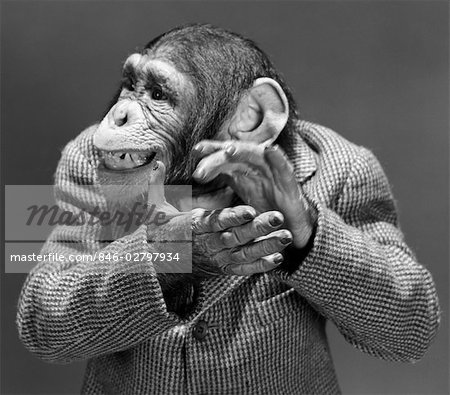 MONKEY CHIMP CHIMPANZEE DRESSED BUSINESS SPORT JACKET CLAPPING HANDS SMILING FUNNY HUMANIZED CHARACTER APPLAUSE Stock Photo - Rights-Managed, Image code: 846-02797934