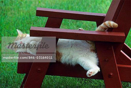 RED TABBY AND WHITE CAT ASLEEP ON CHAIR OUTDOORS Stock Photo - Rights-Managed, Image code: 846-03164011