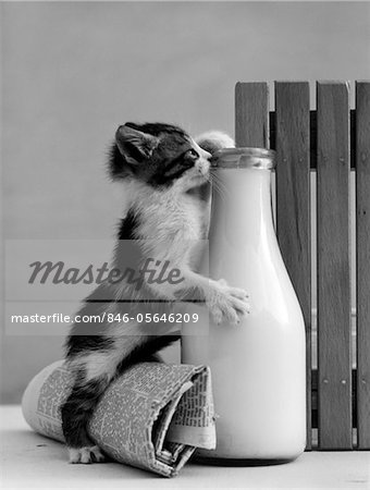 1960s KITTEN STRADDLED ON HIND LEGS OVER ROLLED NEWSPAPER REACHING UP INTO MILK BOTTLE AT FENCE TO REACH CREAM Stock Photo - Rights-Managed, Image code: 846-05646209