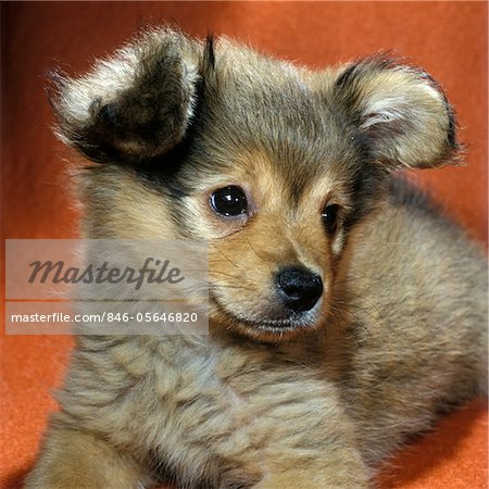 Mutt puppies and Puppys on Pinterest
