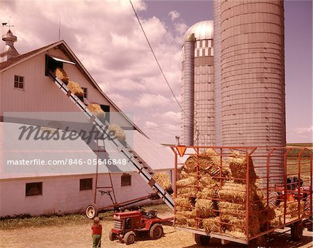 1970s GIRL WATCHING HAY BALES ON CONVEYOR BELT LOADING INTO BARN BY FARM  GRAIN SILOS Stock Photo - Rights-Managed, Image code: 846-05646848
