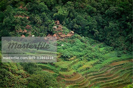 Rice Terraces, Philippines Stock Photo - Rights-Managed, Image code: 849-02861019
