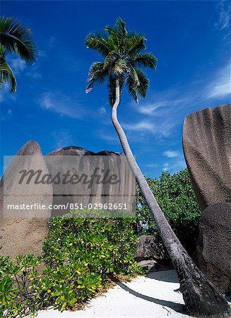 Palm tree and rock formations,Seychelles Stock Photo - Rights-Managed, Image code: 851-02962651