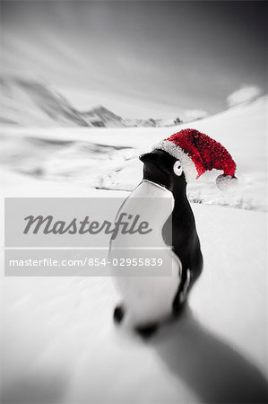 Plastic penguin with a red santa hat standing in the snow Hatcher Pass Southcentral Alaska Winter Stock Photo - Rights-Managed, Image code: 854-02955839