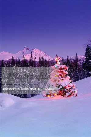 Decorated Christmas Tree @ Chugach NP SC Alaska Stock Photo - Rights-Managed, Image code: 854-02955886