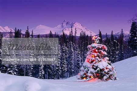 Decorated Christmas Tree @ Chugach NP SC Alaska Stock Photo - Rights-Managed, Image code: 854-02955887
