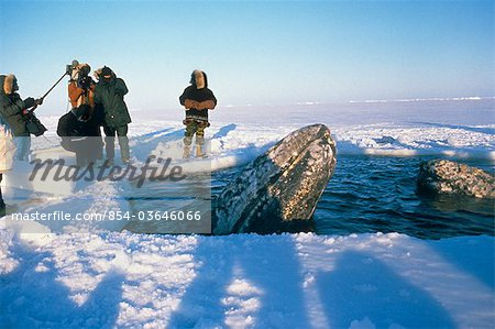 Local Alaskans & News Crews view whales trapped by sea ice through a breathe hole near Point Barrow during the 1988 California Gray Whale Rescue, Arctic Alaska, Winter/n Stock Photo - Rights-Managed, Image code: 854-03646066